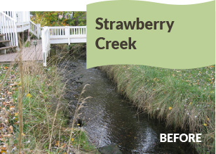 Strawberry Creek Before
