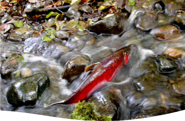 Clean water kitsap improve your backyard stream for Septic design kitsap county